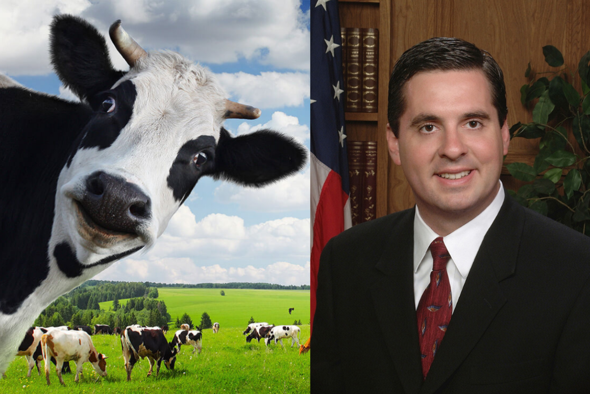 a photo of a cow next to a photo of California Rep. Devin Nunes