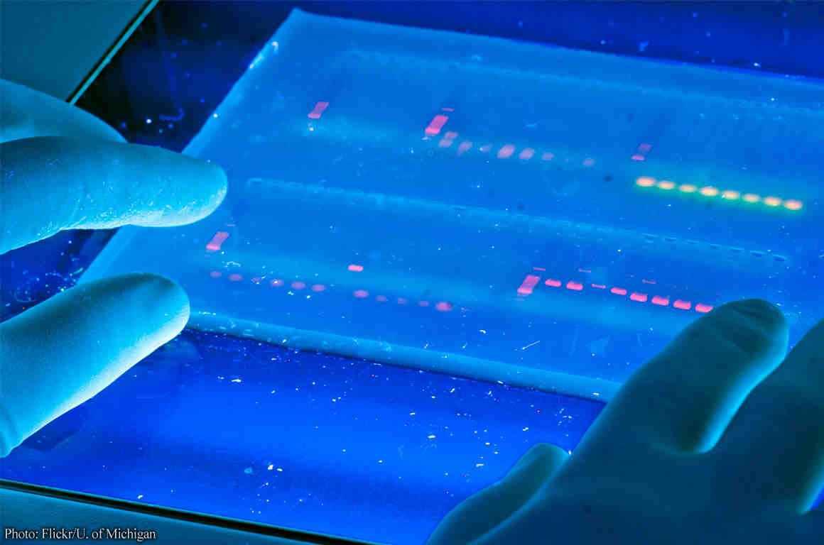 DNA sampling from University of Michigan's DNA lab